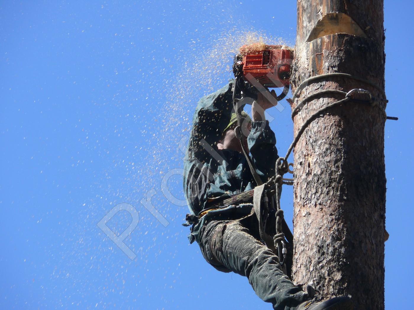 Услуги промышленных альпинистов в витебске